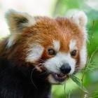 Compiler: Mozilla testet Clang als Firefox-Compiler für Windows