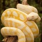 Projekthoster: Github zeigt Sicherheitswarnungen für Python