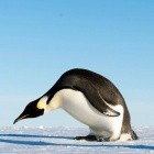 Linux-Kernel: Treiber für Mainboard-Chips und -Sensoren verlieren Betreuer