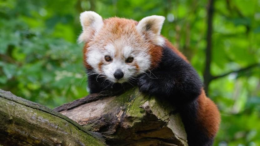 Der RSS-Support im Firefox wird abgeschafft.