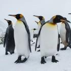 Linux-Distribution: Slackware-Gründer offenbar um Einnahmen betrogen