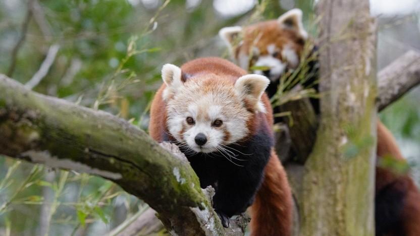 Im Projekt Fission will Mozilla die Firefox-Prozesse für eine starke Seitenisolierung nutzen.