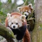 Mozilla: Firefox soll stärkere Seitenisolierung bekommen