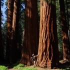 GPG-Entwickler: Sequoia-Projekt baut OpenPGP in Rust