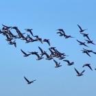 Flughafen: Ingenieure bringen Drohne das Vögelhüten bei
