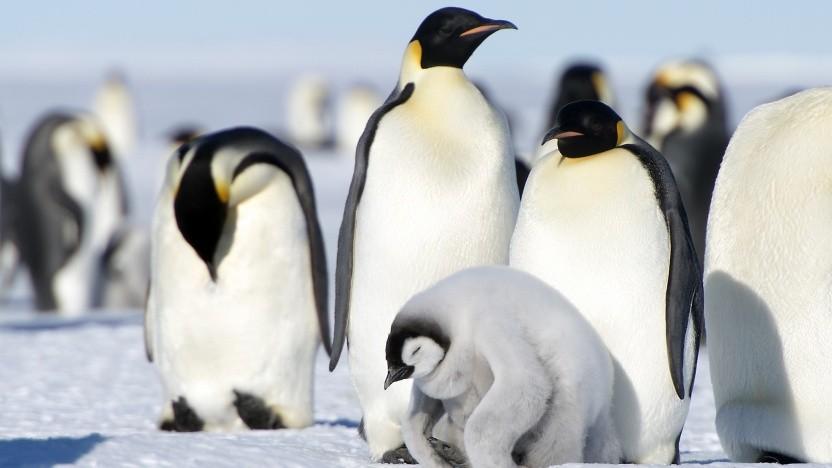 Die noch junge Implementierung von Speck im Linux-Kernel braucht nun keiner mehr.