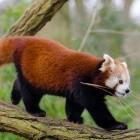 Mozilla: Firefox testet Funktion für Webseiten-Empfehlungen
