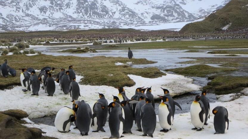 Eigentlich arbeitet die Linux-Community gut zusammen.