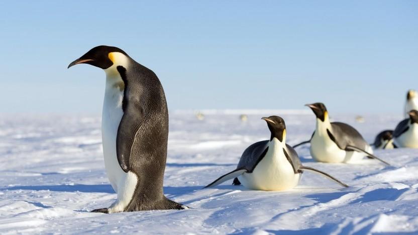 Der Linux-Kernel wird Speck wohl künftig nicht mehr enthalten.