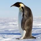 Verschlüsselung: NSA-Chiffre Speck fliegt aus dem Linux-Kernel