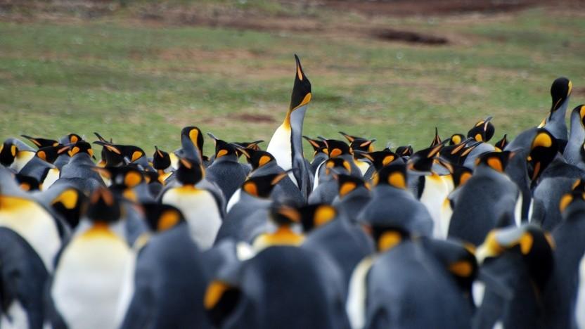 In der Linux-Community richtet sich sehr viel nach Linus Torvalds - vielleicht zu viel.