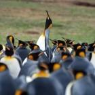 Linux: Kernel-Entwickler verlegen Konferenz wegen Torvalds' Urlaub