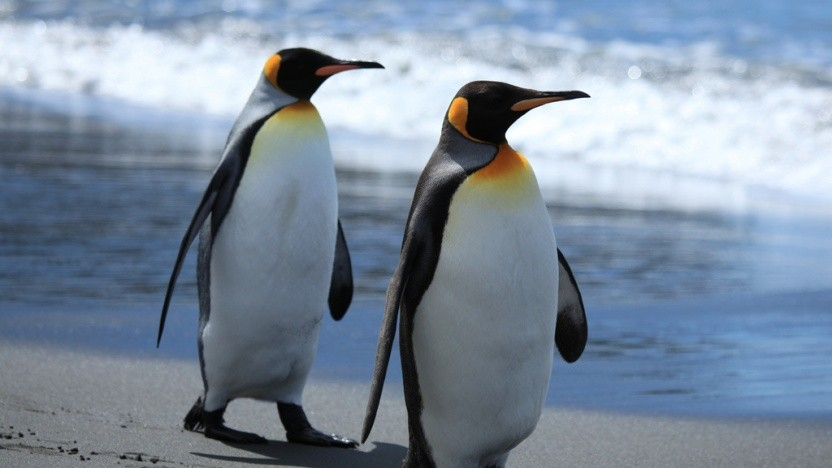 Der Linux-Kernel bekommt vermutlich ein weiteres Dateisystem.
