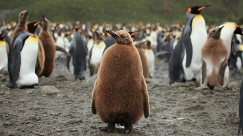 Linux-Container sollen künftig besser mit zeitlichen Veränderungen umgehen können.