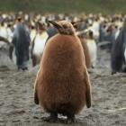 Namespace: Linux-Kernel soll Zeit containerisieren