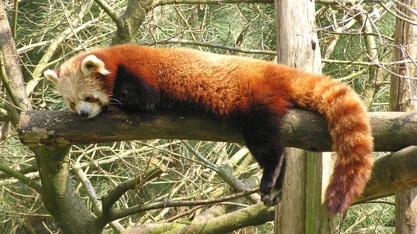 Nach einigen Jahren Abwarten wird Firefox das WebP-Format unterstützen.
