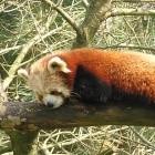Bildformat: Edge und Firefox bekommen WebP-Unterstützung