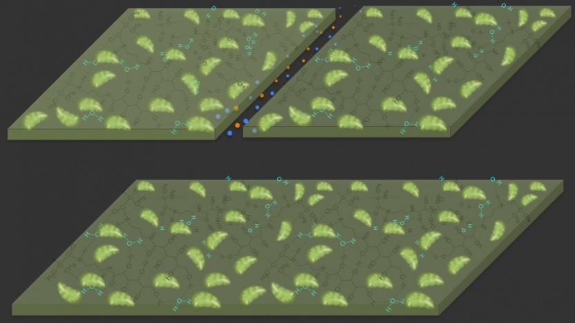 Selbstheilendes Material: Chloroplasten aus Spinat