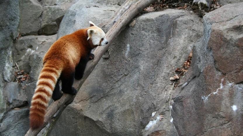 Firefox wird mit Version 64 RSS-Feeds nicht mehr unterstützen.