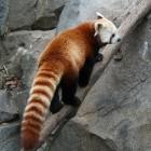 Browser: Mozilla bestätigt Support-Ende für RSS in Firefox