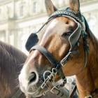 Wochenrückblick: Was das Pferd uns lehrt