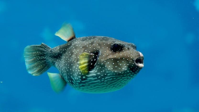 Der Kugelfisch ist das Maskottchen von OpenBSD.