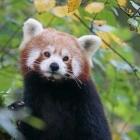 Mozilla: Firefox 63 erweitert Optionen für Trackingschutz