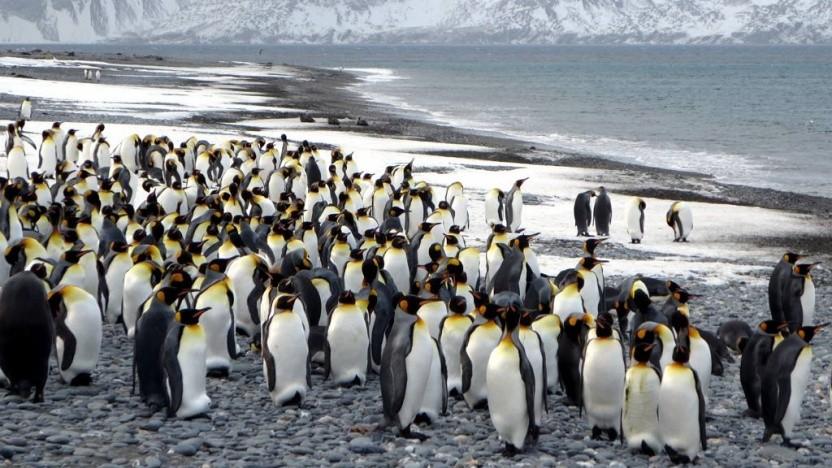 Die Linux-Community scheint mit der Fülle an Patches überfordert zu sein.