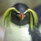 Linux: Sicherheitslücke in Systemd
