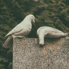 E-Mail-Hoster: Mailbox.org kümmert sich um digitales Erbe