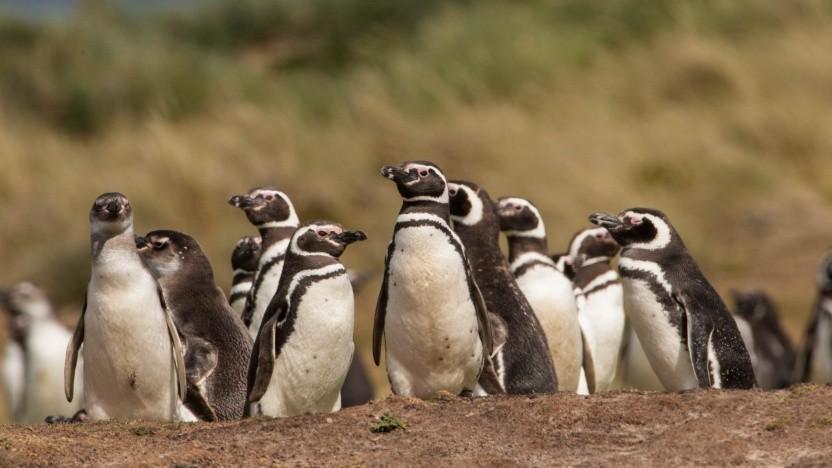Linux-Systeme sollen einen einheitlichen Compute-Stack bekommen.