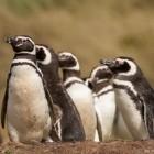 Plumbers Conference: Linux-Entwickler will einheitliche Cuda-Alternative schaffen