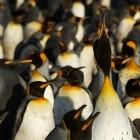 STIBP: Linux-Kernel-Entwickler mögen Spectre-v2-Schutz nicht