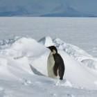 Linux: Android-Geräte sollen künftig Standard-Kernel-API benutzen