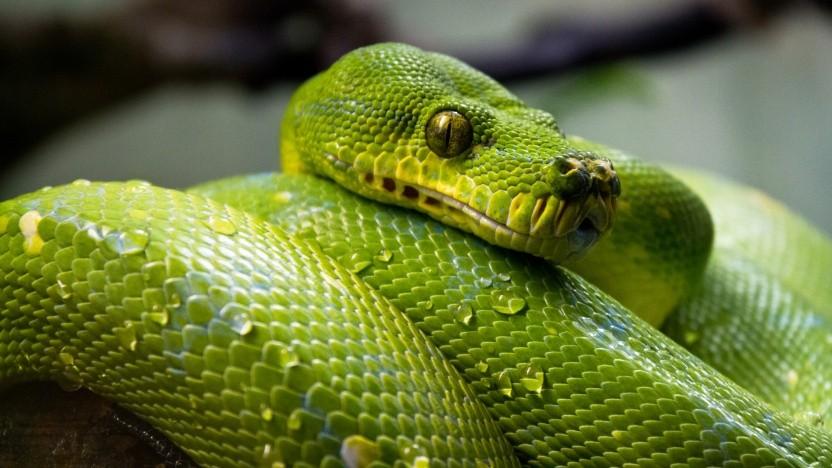 Das Framework Django ist in Python geschrieben.
