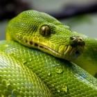 Python: Webframework Django beklagt Nachwuchsproblem
