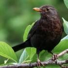 Blackbird: Raptor bringt Power9-Board und -CPU für 1.000 US-Dollar