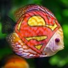 Superfish: Für Adware muss Lenovo 7,3 Millionen US-Dollar zahlen