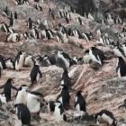 CPU-Befehlssatz: Linux Foundation will RISC-V-Konsortium unterstützen