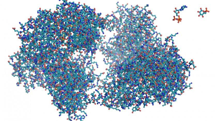 Protein Hexokinase (Symbolbild): Struktur von 25 Proteinen richtig berechnet