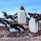 WLinux Enterprise: Start-up bringt RHEL-Klon auf Windows-Subsystem für Linux