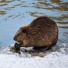 Bionic Beaver: Ubuntu 18.04 bekommt OpenSSL 1.1.1 und TLS 1.3 als Update