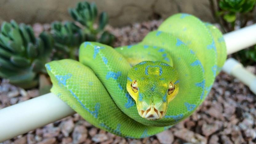 Die Entwicklung der Sprache Python wird künftig durch ein Gremium verantwortet.