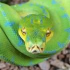 "Programmiersprache: Python bekommt Leitungsrat statt ""Diktator"""