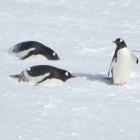 Variable Bildwiederholrate: Linux bekommt Freesync-Unterstützung