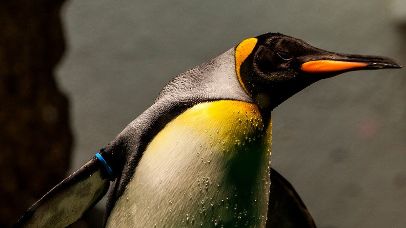 Linus Torvalds hat Linux 4.20 freigegeben.