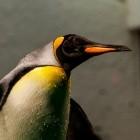 Betriebssysteme: Linux 4.20 beschleunigt Dateizugriffe, verhindert Ausfälle