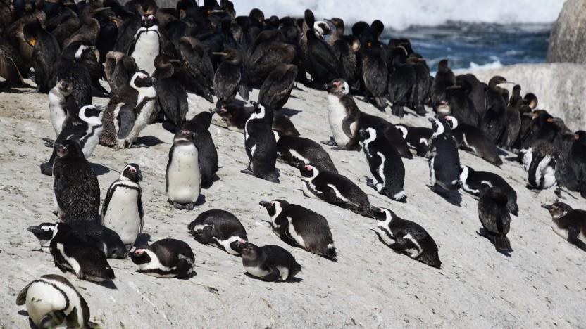 Die Linux-Kernel-Community sucht nach einem Ersatz für die Retpolines.