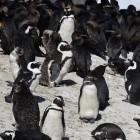 Retpoline: Linux-Kernel soll besseren Spectre-Schutz bekommen