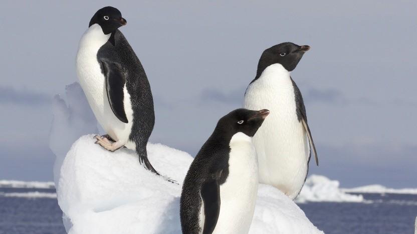 Der freie Linux-Treiber für die Mali-GPUs kann nun viele Anwendungen darstellen.